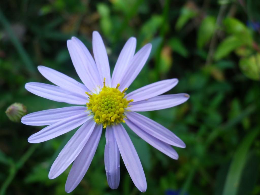 美花(びはな)
