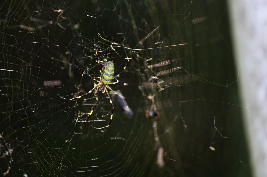 蜘蛛 (森下宏治)