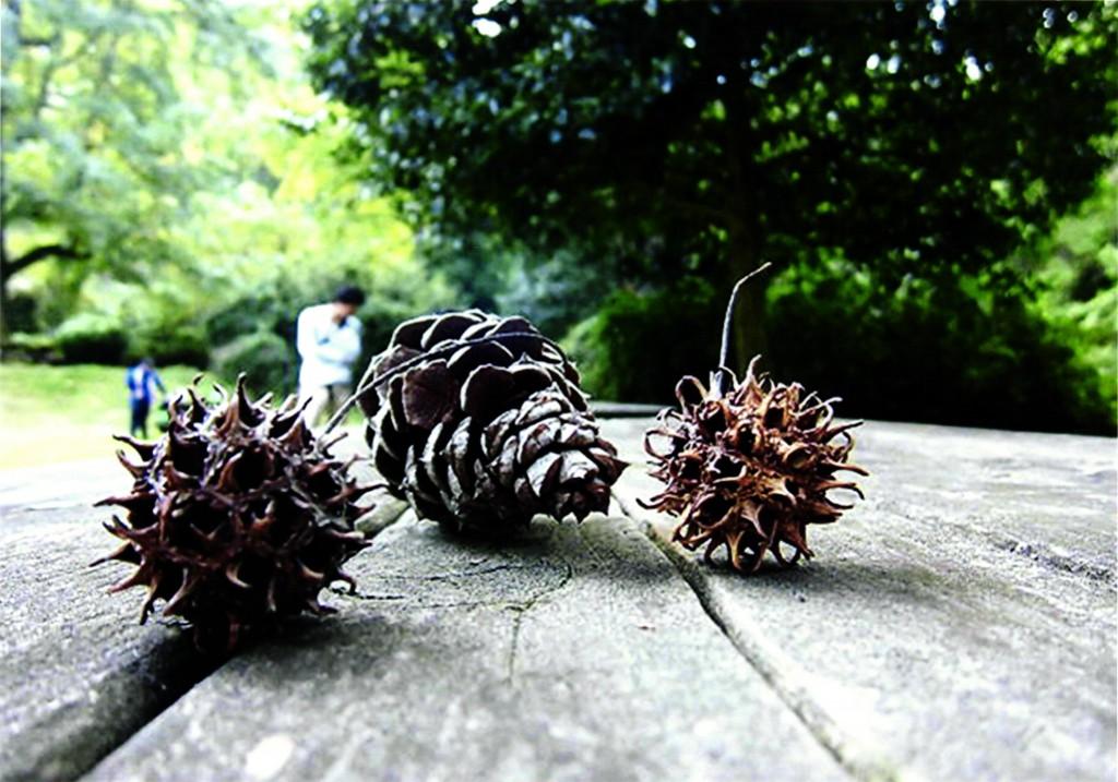 森の贈り物 (遠藤朝葉 小学5年生)